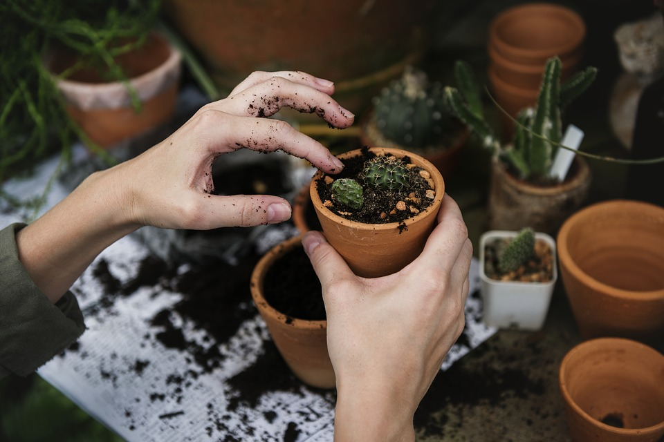 Tuinieren laat je tot rust komen!
